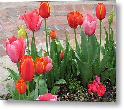 Metal Print featuring the photograph Tulips by Shawn Hughes