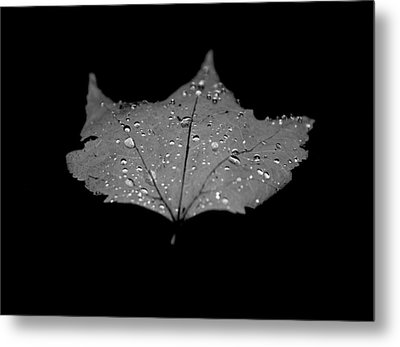 Turn Over A New Leaf Metal Print by Betsy Knapp