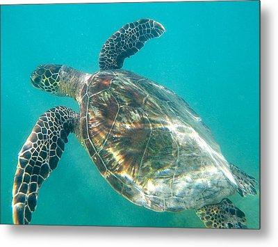 Turtle 7 Metal Print by Erika Swartzkopf
