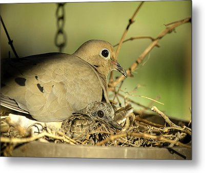 Turtle Doves Metal Print by Shirley Tinkham