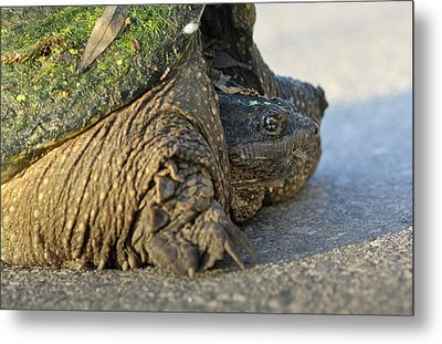 Metal Print featuring the photograph Turtle by Nick Mares