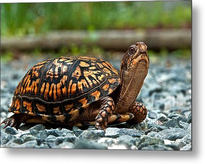Turtle Shine Metal Print