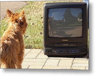 Tv Watching Dog Metal Print by Susan Stone