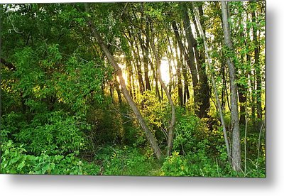 Twilight In The Woods Metal Print by Anna Villarreal Garbis