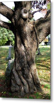 Twisted Tree Metal Print by Janice Paige Chow