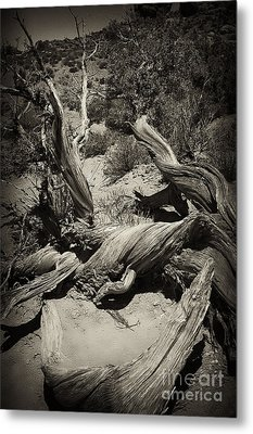 Twisted Wood Metal Print