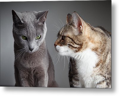 Two Cats Metal Print by Nailia Schwarz