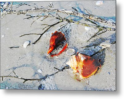 Two Conch Shells With Branch Metal Print by Olivia Novak