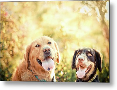 Two Dogs Metal Print by Jessica Trinh