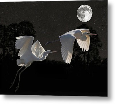 Two Great Egrets  Metal Print by Eric Kempson