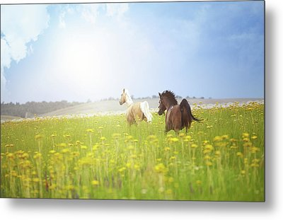 Two Horses Metal Print by Arman Zhenikeyev - professional photographer from Kazakhstan