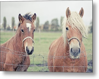 Two Horses Behind A Wired Fence Metal Print by Cindy Prins