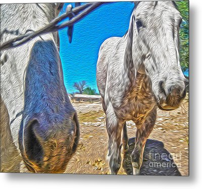 Two Horses Metal Print by Gregory Dyer