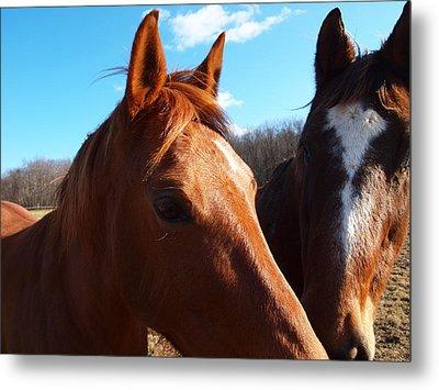 Two Horses In Love Metal Print by Robert Margetts