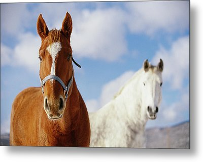 Two Horses Metal Print by Noah Clayton