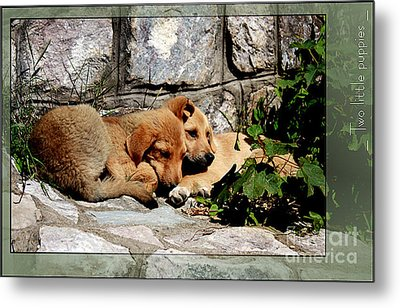 Two Little Puppies Metal Print by Melania Sherdenkovska