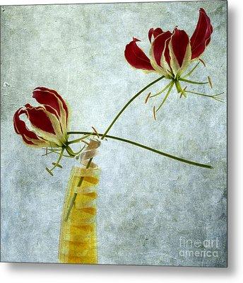 Two Gloriosa Lily. Metal Print by Bernard Jaubert