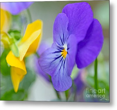 Two Pansies Ln Love Metal Print