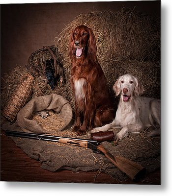 Two Setters With The Gun... Metal Print