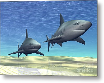 Two Sharks On Patrol Over A Sandy Reef Metal Print by Corey Ford