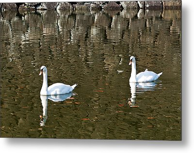 Two Swan Floating On A Pond  Metal Print by U Schade