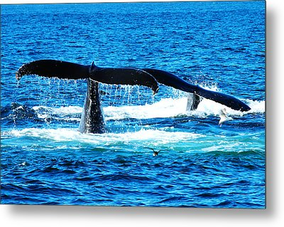 Two Whale Tails Metal Print by Paul Ge