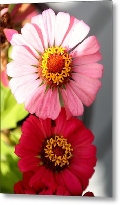 Metal Print featuring the photograph Two Zinnias In The Shade by Paula Tohline Calhoun