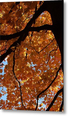Under The Canopy Metal Print by Lyle Hatch
