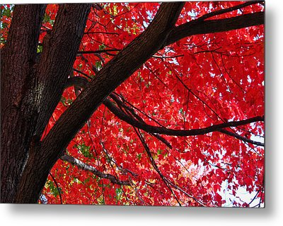 Under The Reds Metal Print by Rachel Cohen