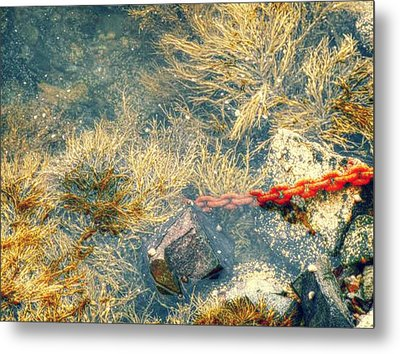 Metal Print featuring the photograph Under The Sea by Kelly Reber