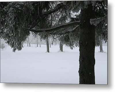 Under The Trees Metal Print by Ellery Russell