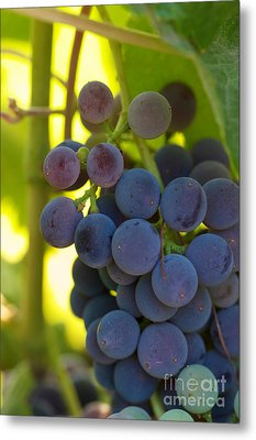 Under The Vine Metal Print by Brooke Roby