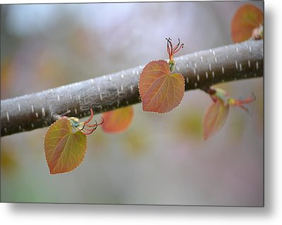 Metal Print featuring the photograph Unfurling Buds In The Heart Of Spring by JD Grimes
