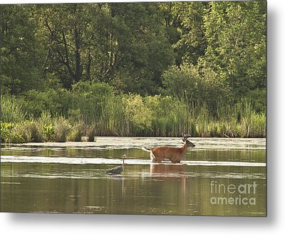Metal Print featuring the photograph Unusual Pair  by Jeannette Hunt