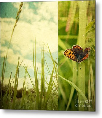 Unveil Metal Print by Violet Gray