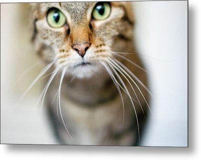 Up Close Brown Striped Cat Metal Print by Charity Burggraaf