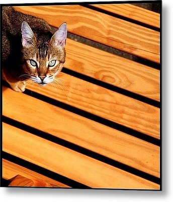 Up Metal Print by Mark B