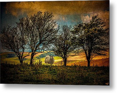 Metal Print featuring the photograph Up On The Sussex Downs In Autumn by Chris Lord