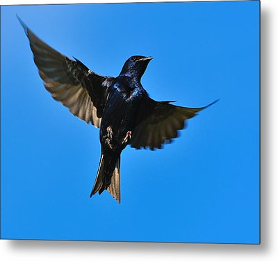 Up Metal Print by Tony Beck