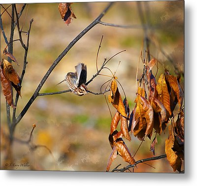 Up Up And Away - Sparrow Metal Print by J Larry Walker
