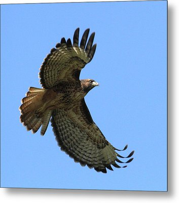 Up Up And Away Metal Print by Angie Vogel