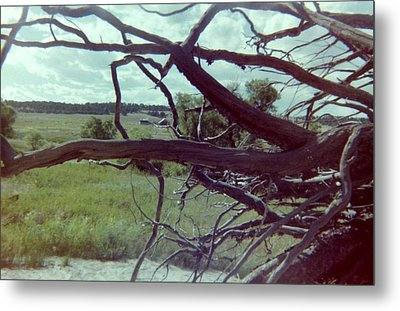 Metal Print featuring the photograph Uprooted by Bonfire Photography