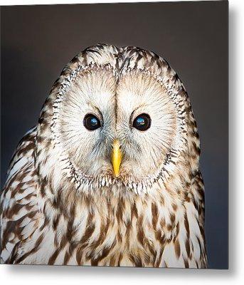 Ural Owl Metal Print