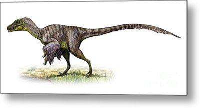 Velociraptor Mongoliensis Metal Print