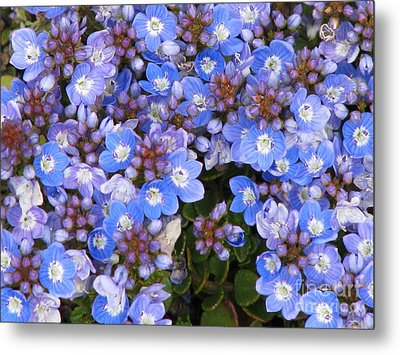 Metal Print featuring the photograph Veronica by Michele Penner