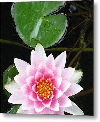 Vertical Water Lily Metal Print by Debbie Finley