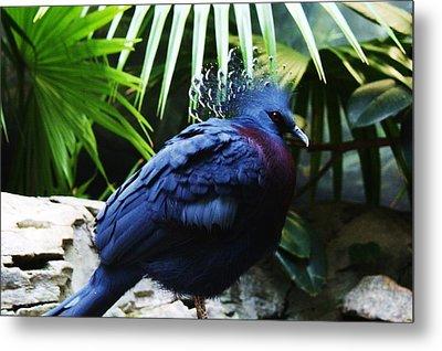 Victoria Crowned Pigeon Metal Print by Paulette Thomas