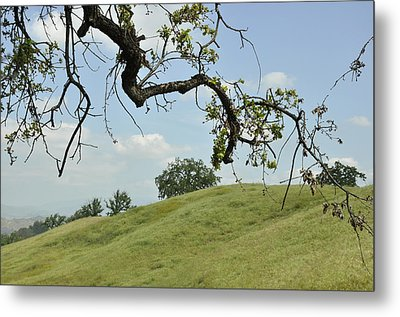 View From Under The Oak Metal Print by Sandy Fisher