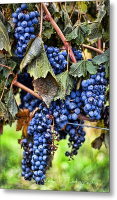 Vines And Clusters Metal Print by Randy Wehner Photography