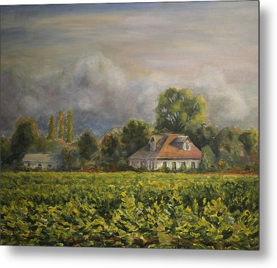 Vineyard Fog Santa Rosa Metal Print